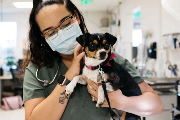 emergency-vet-clinic-monument-72